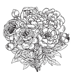 Hand drawn peony flowers bouquet vector