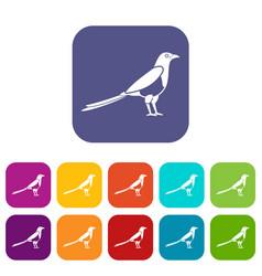 Bird magpie icons set vector