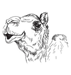 Hand sketch of the head of a camel vector