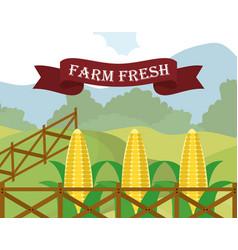 Farm fresh corn food diet vector