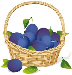 basket with plums vector image vector image
