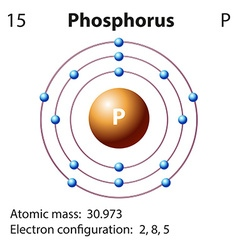 Diagram representation of the element phosphorus vector