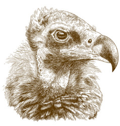 engraving of cinereous vulture vector image vector image