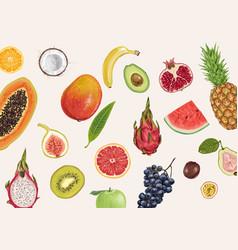 Exotic juicy delicious fruits vector