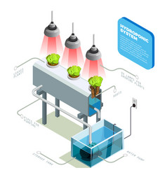 Hydroponic system infographic layout vector