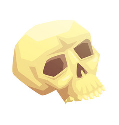 Human skull bone vector