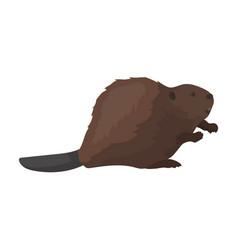 canadian beaver canada single icon in cartoon vector image