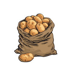 Burlap sack full of ripe potato hand drawn vector
