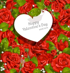 Valentines Day card red roses background vector image