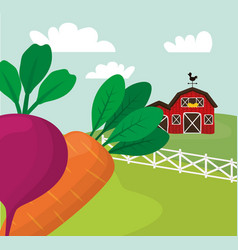 farm fresh vegetables harvest vector image vector image