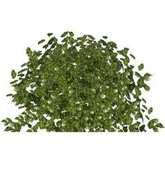 Plant green bushy shrub vector