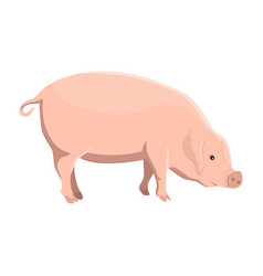 a pig vector image