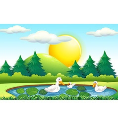 Three ducks in the pond vector image vector image