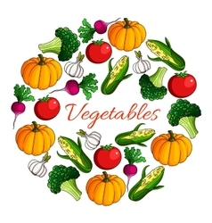 Vegetables harvest poster of vegetarian veggies vector