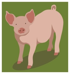 Animal pig on green vector image