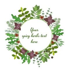 Fresh herbs circular frame vector image
