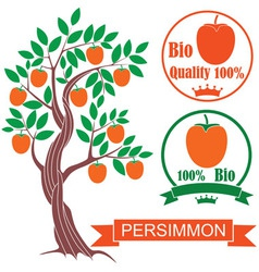 Persimmon vector