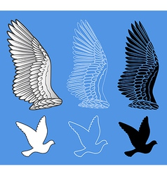 Dove bird wings set vector
