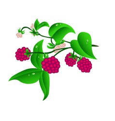 sprig raspberry vector image vector image