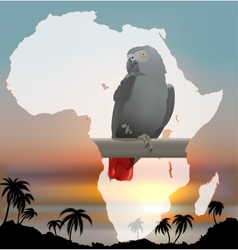 African map with background and Grey Parrot vector image vector image
