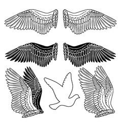 Dove bird wings set vector image vector image