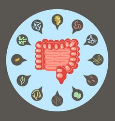 Set of enteric bacteria vector