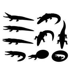 Set of crocodile silhouettes on white vector