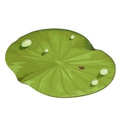 Lotus leaf vector