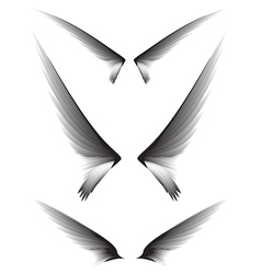 Set gray wings design element vector