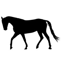 Silhouette of black mustang horse vector