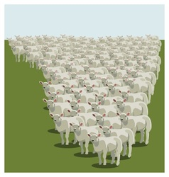 Animal sheep herd queuing vector