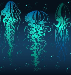 Jellyfish01 vector