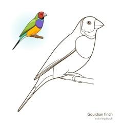 Gouldian finch bird coloring book vector