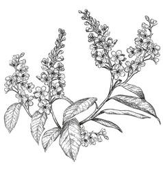 Hand drawn bird cherry tree sketch vector