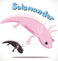 Salamander 2 vector