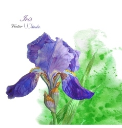 Iris with green watercolor background-04 vector image