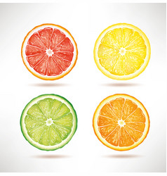 Lime lemon orange grapefruit slices vector