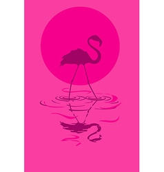 Flamingo at sunset or sunrise vector
