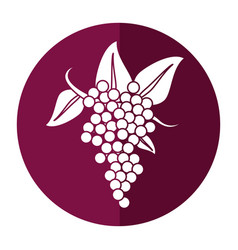 bunch grape wine icon shadow vector image