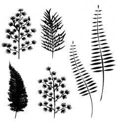 collection for designers plant vector image