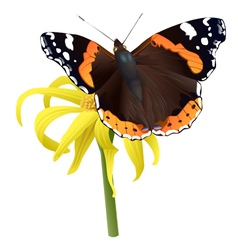 Butterfly on yellow flower isolated vector