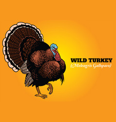 wild turkey in hand drawing style vector image
