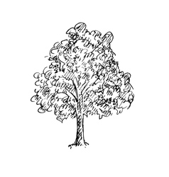 Black and white sketch of a tree vector