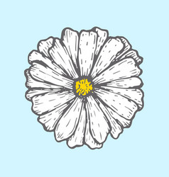 Chamomile isolated on blue background simple vector