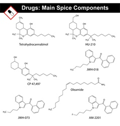 Main spice compounds vector