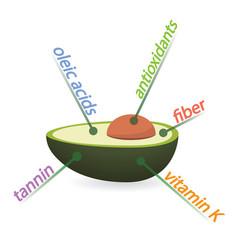 Avocado content properties and benefits vector