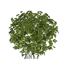 Plant green fluffy round bush vector