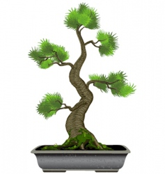 bonsai tree vector image vector image