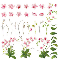Orchid tropical flowers floral elements vector
