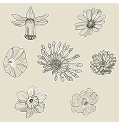 Set of seven graphic flowers vector